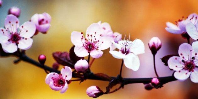 Spring Garden Ornamental 2020 Trade Show