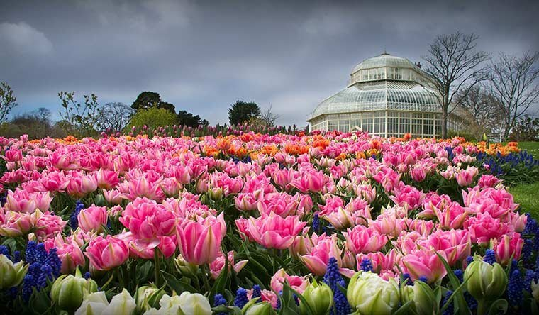Tour of the National Botanical Garden Dublin