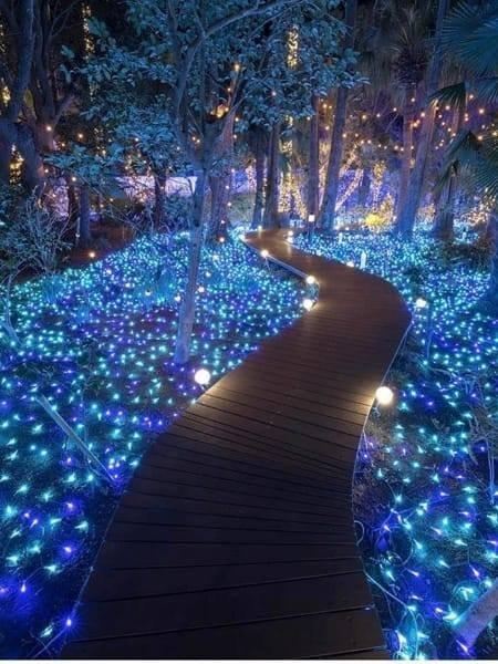 Aperitif in the Secret Garden of Lights