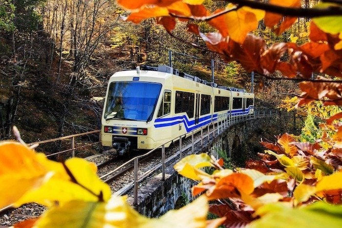 The Foliage Train