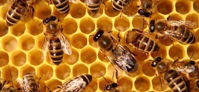 Bee Festival 2020