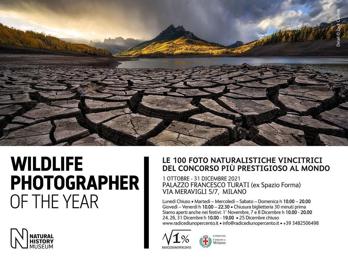 Wildlife Photographer Milano